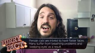 Furryocious with Mike Falzone